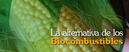 La alternativa de los Biocombustibles